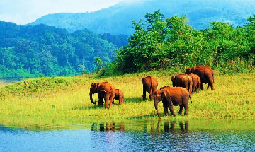 Thekkady Tour Package From Cochin BookOtrip